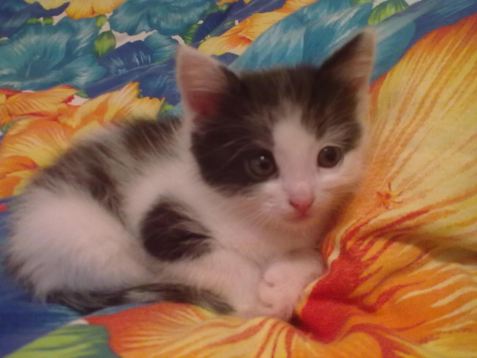 Фото - Отдам в добрые руки кошечку!