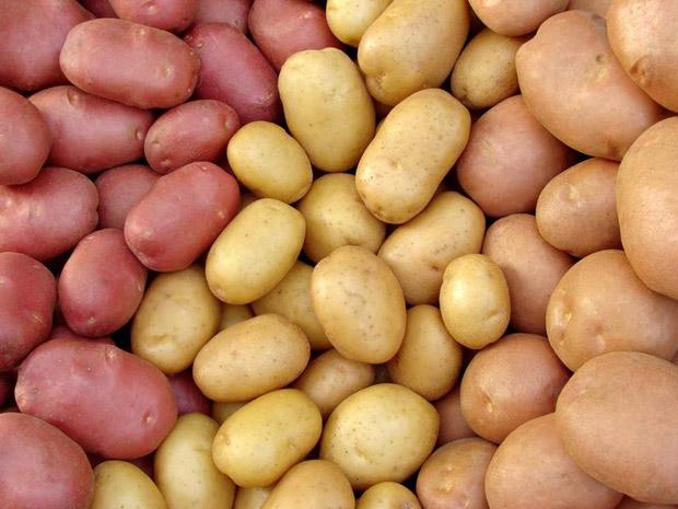 Фото - семенной картофель