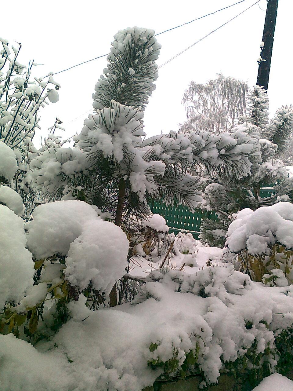 Первый снег.http://blagomin.ru/