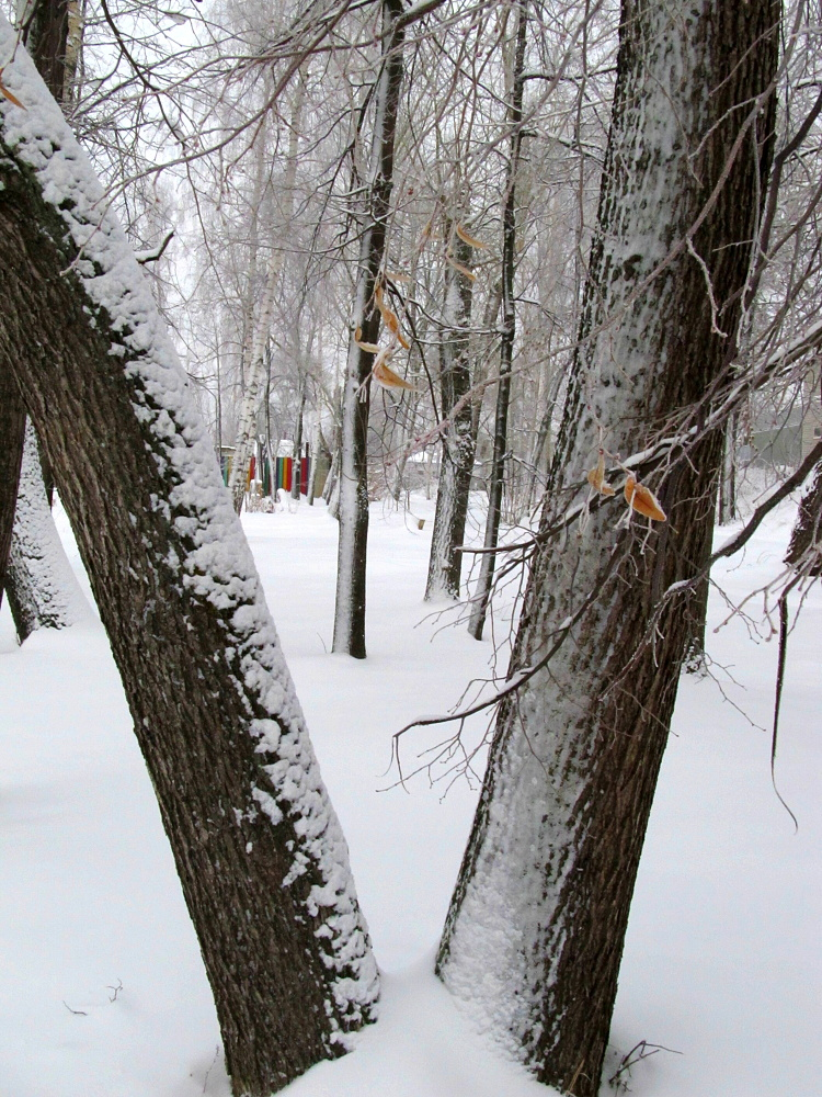 Геометрия Зимы (Фото С. Мохов)