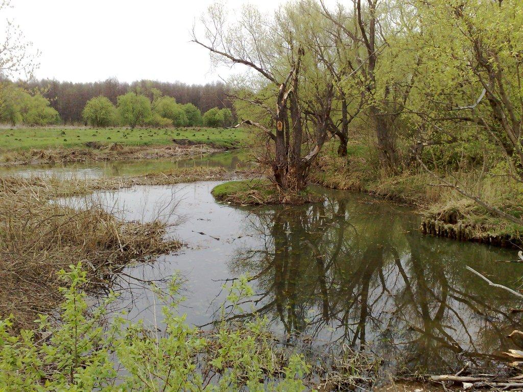 Вид с плотины на реке Верда, между поселком Заречный и селом Чулково