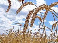 Сельскохозяйственные новости из Скопинского района
