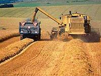 В восьми сельскохозяйственных предприятиях Скопинского района зерновые обмолочены полностью