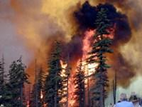 В Рязанской области продолжаются работы по ликвидации природных пожаров
